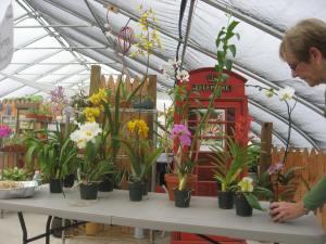 orchid nursery speaker 2