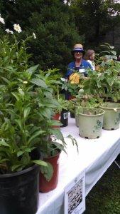 Plant Sale 2015 4