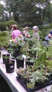Plant Sale 2015 5