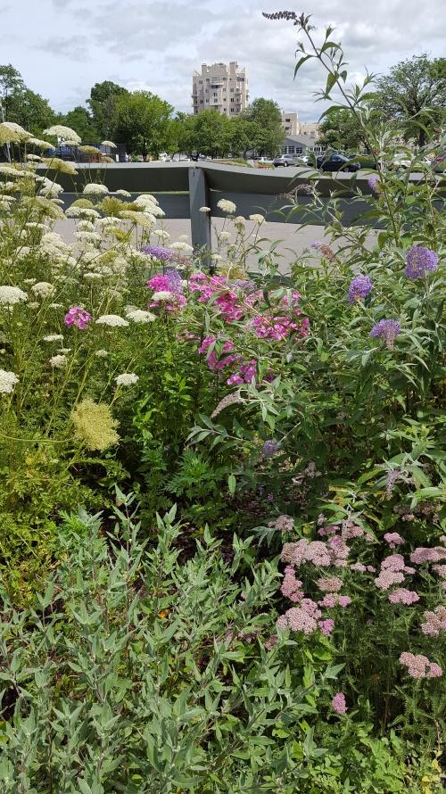 Butterfly Garden July