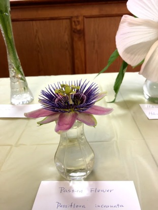 Horticulture Show 7