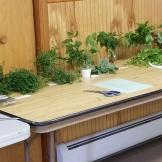 herb infused vinegar herbs